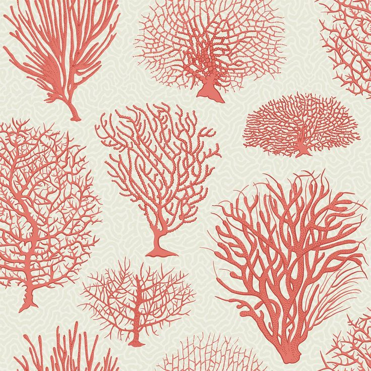 Seafern Coral wallpaper by Cole & Son