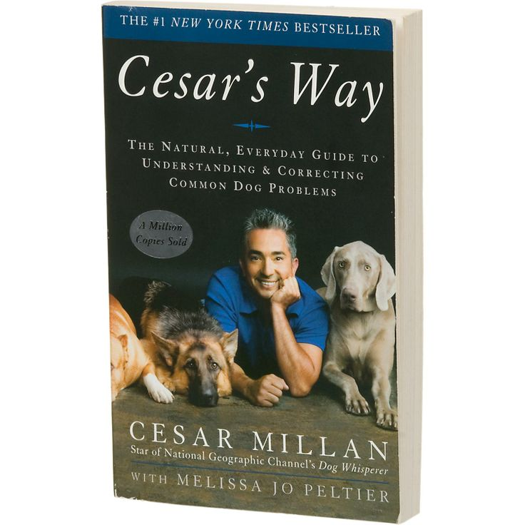 Is Cesar Dog Food Bad For My Dog