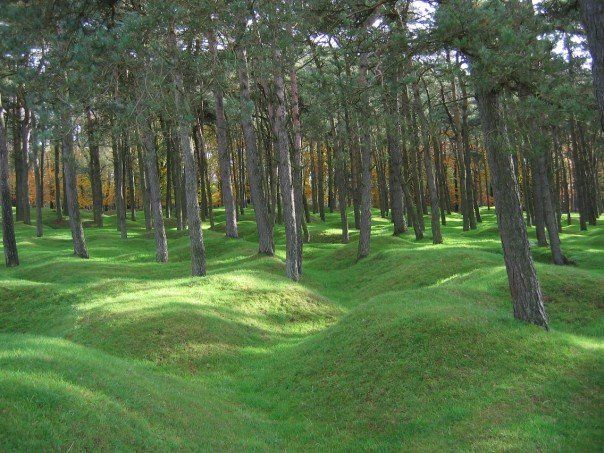 Plantation de pins à Vimy. pine tree forest. the topography you see was created by the war in france. These trenches are probably date back to the first world war.