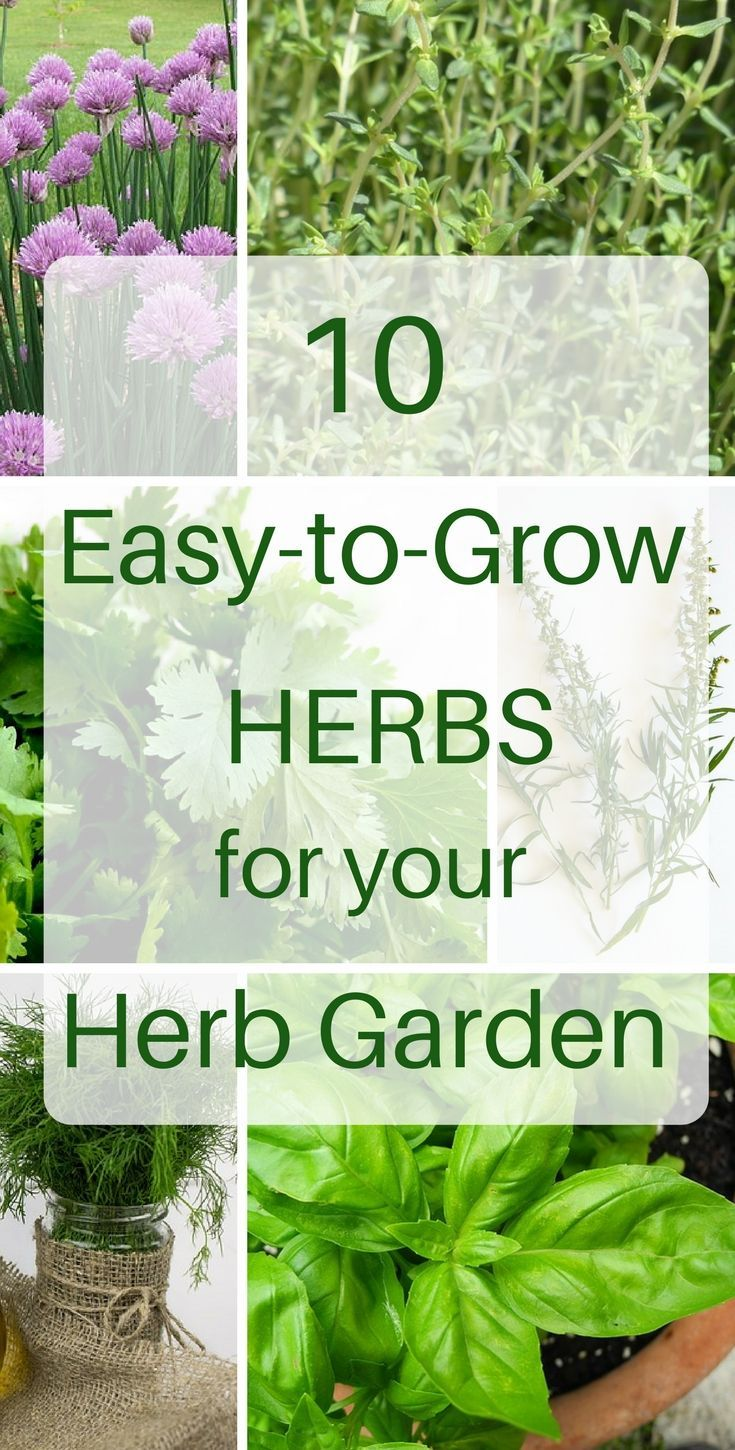 10 Herbs That Are Super Easy To Grow