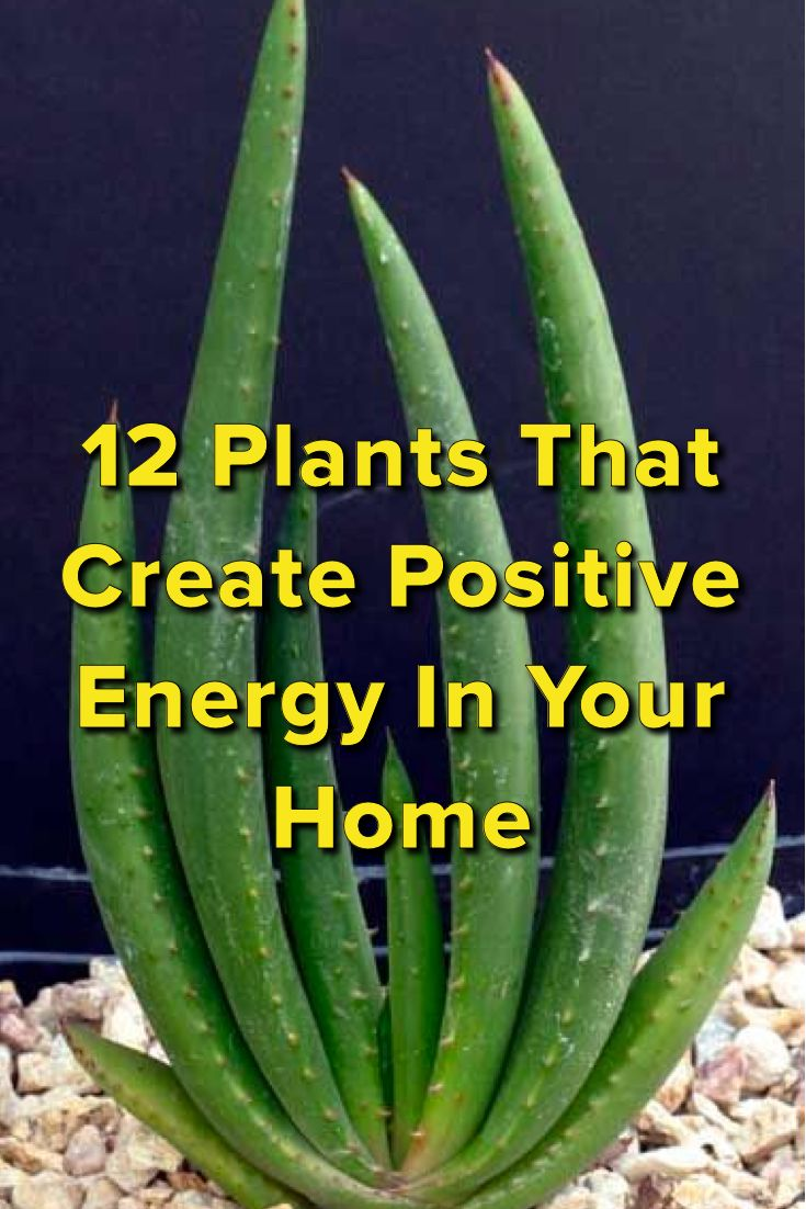 12 Plants That Create Positive Energy In Your Home