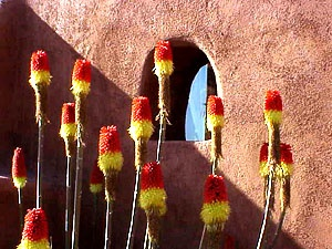 Santa Fe NM.  ooh yeah, red-hot pokers -- a perfect plant/flower for southwest design