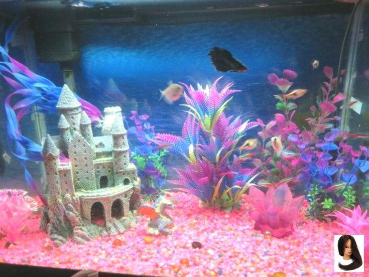 Kein Titel Kein Titel Fish Tank Themes Fish Tank Aquarium Fish Tank