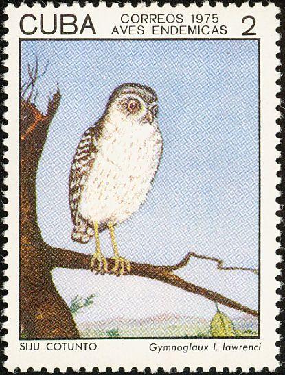 Bare-legged Owl Margarobyas lawrencii - Google Search