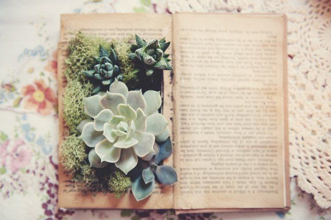 Literary Book Lover DIY Wedding Styling Ideas. Fill forgotten books with an assortment of succulent plants and foliage to create table decor that will start conversations. Consider using a mix of succulents and moss in various hues of green which will look gorgeous set against the pages of old sepia print. See more Literary Book Lover Wedding – DIY Styling Ideas here! ♥  ♥  ♥ Follow us on Facebook: www.facebook.com/confettidaydreams ♥  ♥  ♥ #bookwedding #librarywedding  #diy #wedding