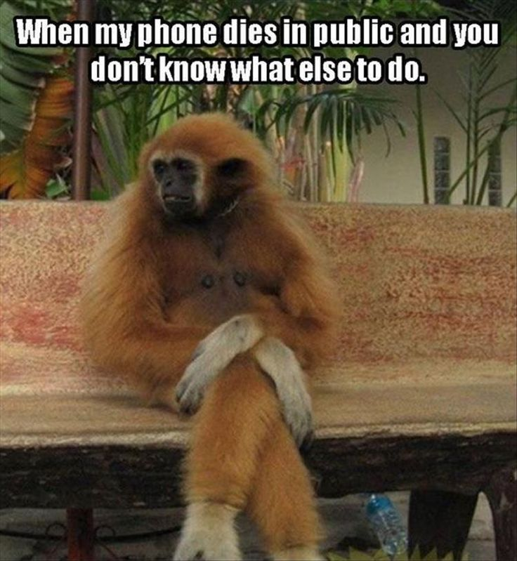 Funny Animal Pictures Of The Day - 28 Pics | Funny Animals ...