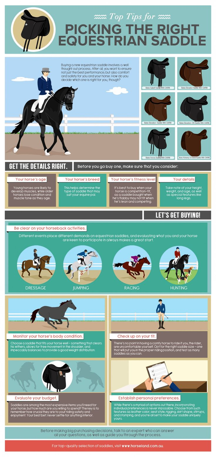 Top tips for choosing a saddle                              …