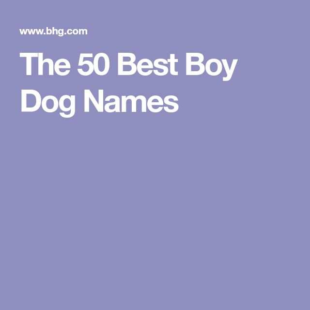 The 50 Best Boy Dog Names