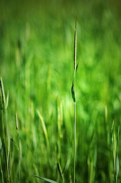 Green Grass by sam...
