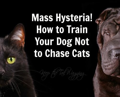 With some dogs, it's a natural instinct to chase or herd cats creating a chaotic environment in your home; here are tips to help a dog make peace with the cat.