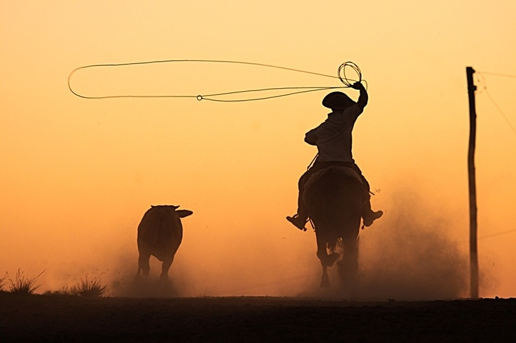 Gaucho working... Rio Grande Do Sul, Brazil
