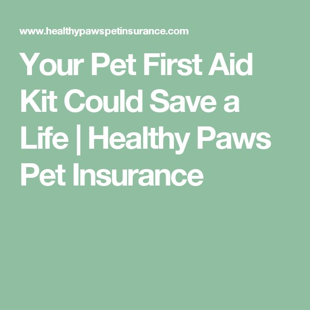 Your Pet First Aid Kit Could Save a Life | Healthy Paws Pet Insurance
