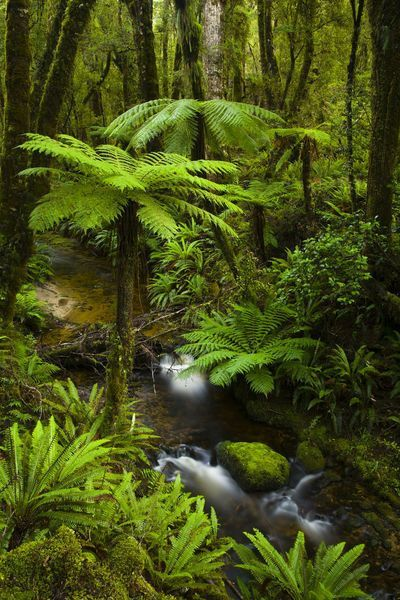 Tuatapere Hump Ridge Track, Southland, New Zealand.: