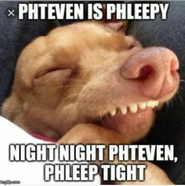 Phteven Dog Blank