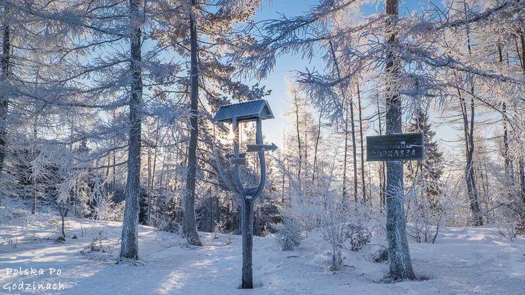 Mrożny poranek na górskim szlaku. W drodze na Wysoką - najwyższy szczyt Pienin.   #góry #Pieniny #Polska #Poland #mountains #hiking #zima