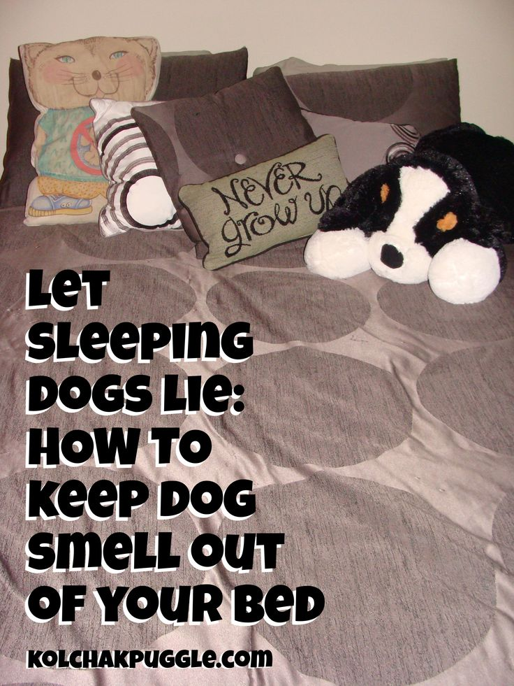 How To Keep Dog Smell Out Of Your Bed Dog Smells Dog