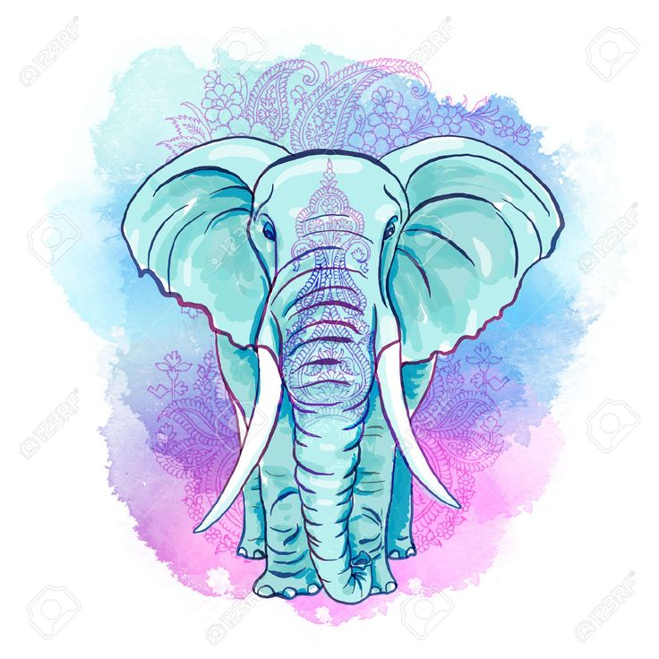 Las 25 mejores ideas sobre elefante mandala en pinterest y - Fotos de elefantes bebes ...