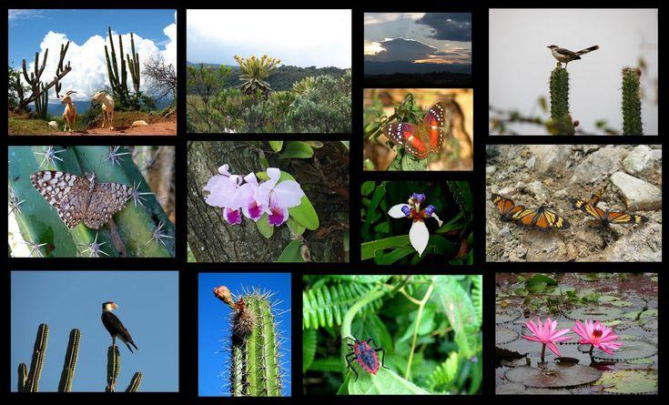 flora del mundo -Con esta variedad COLOMBIA se posiciona como uno de los 19 países mega-diversos del mundo.