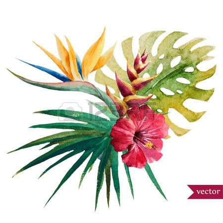 Gyönyörű vektoros illusztráció szép trópusi virágok photo