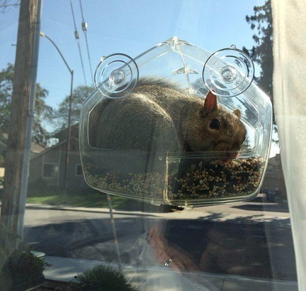Установил кормушку на окно, чтобы понаблюдать за птицами с близкого расстояния...