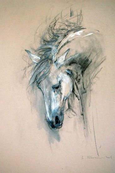 Andalusian stallion sketch