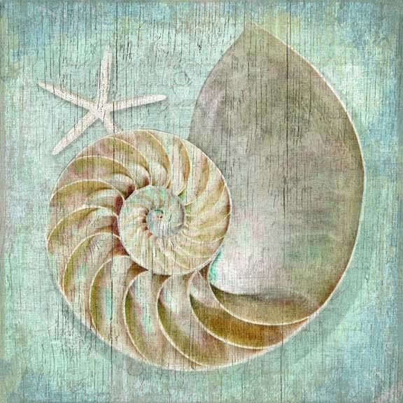 "Suzanne Nicoll coastal nautilus image printed directly to a distressed wood panel creating a unique and rustic approach to her art.. Perfect for a casual or elegant beach house!  Art size is 20"""" x 20"