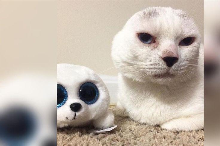 Trotz fehlender Ohren ist Kater 'Otitis' aus Baltimore verspielt wie jede andere Katze auch. Als seine Besitzer das taube Tier aufgegeben haben, rettete ihn Studentin 'Molly'. Und Otitis rettete sie.