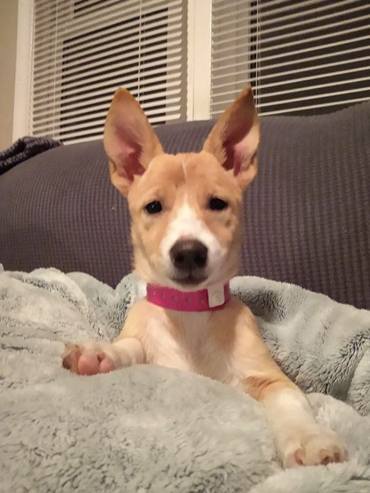 Goldberry Is Quite The Snuggler She Is Only 15 Weeks Old And She Is Looking For Her New Home Now View Her Profile Her Pets Pet Adoption I Love Dogs