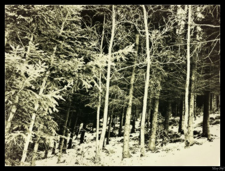 shadows in my wood...