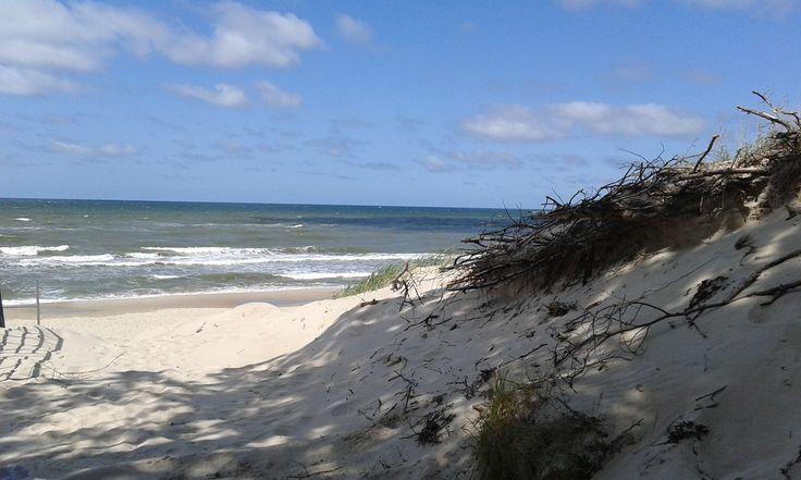 Seashore in June