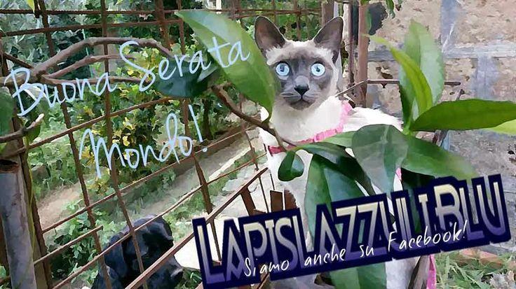 Lapislazzuli Blu: FOTO GALLERY  2
