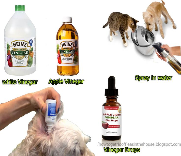How Do Apple Cider Vinegar Kill Fleas Inside And Outdoor