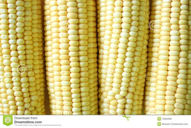 Fresh corn in close-up view