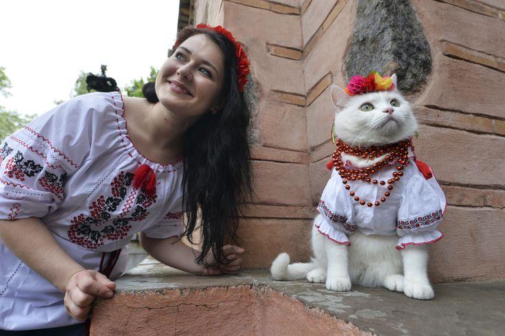 O fată pozează cu o pisică ce poartă o cămaşă tradiţională ucraineană brodată, în timpul unui festival tradiţional, în Kiev, sâmbătă, 17 mai 2014. (  Sergei Supinsky / AFP  ) - See more at: http://zoom.mediafax.ro/news/cats-in-the-news-12976632#sthash.kVUHaMTi.dpuf