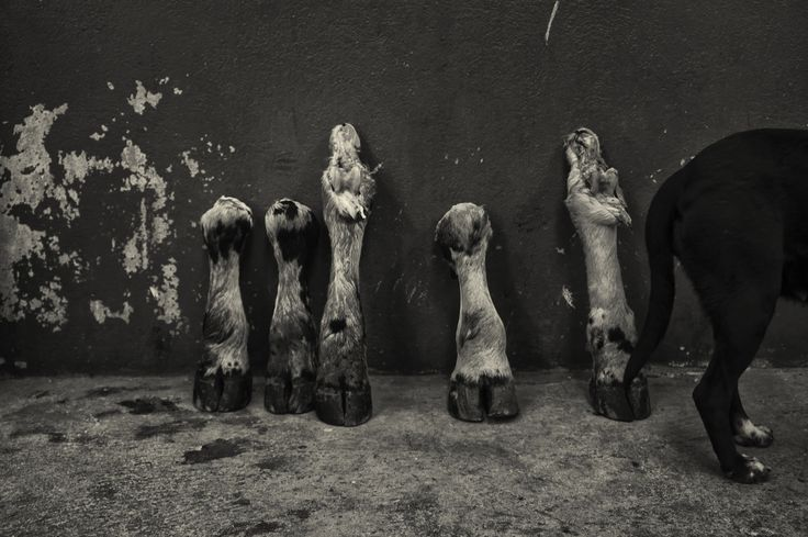 https://flic.kr/p/j3vFub | Cow hooves | By the end of the day, a local butcher has little to offer customers. Murillo, Colombia.  All images © Michael Evans All Rights Reserved