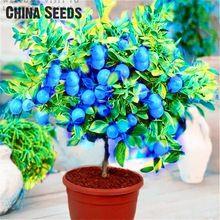 Envío gratis 50 blue lemon tree semillas embalaje hermético al aire libre de interior semillas de plantas disponibles * semillas de la herencia de frutas bonsai lemon(China (Mainland))