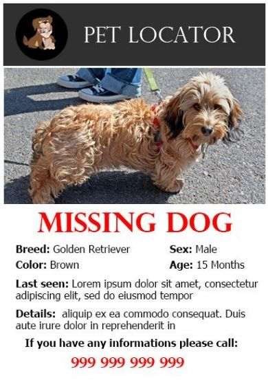 missing dog posters template