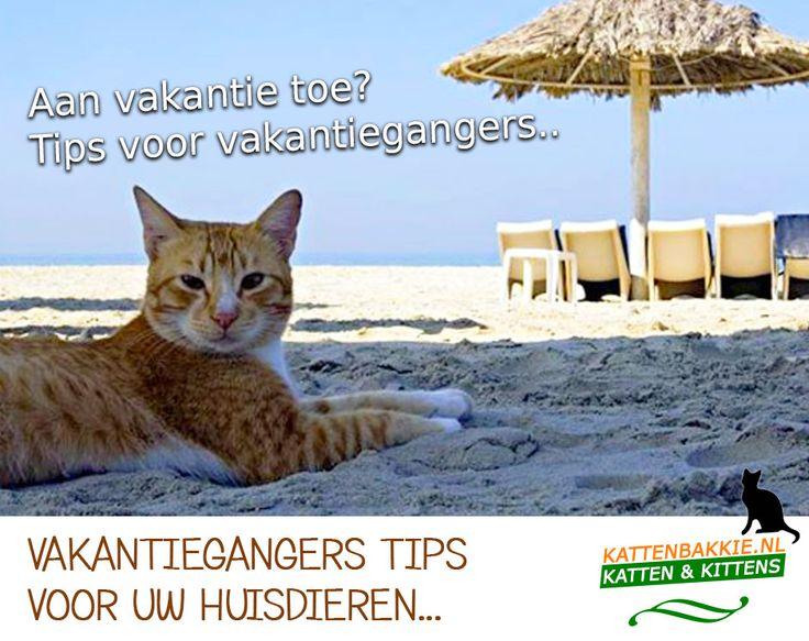Heeft u voor de vakantiegangers nog tips? Bijvoorbeeld, een goed dierenpension voor hun huisdier? Deel uw vakantie tip!