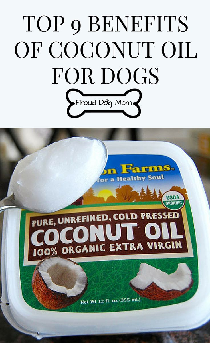 Top 9 Benefits of Coconut Oil For Dogs Dog Health Tips Holistic Health and Wellness Tips