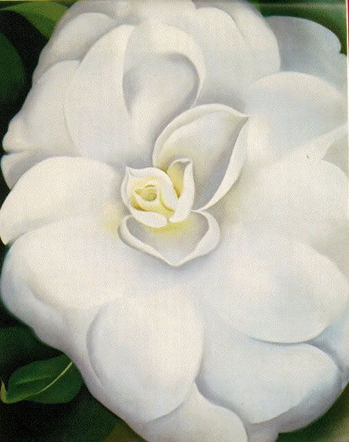 251 best art georgia okeeffe images on pinterest georgia okeefe georgia okeefe white camelia mightylinksfo