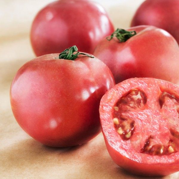 25 Best Images About Tomatoes In Our Hot Climate On