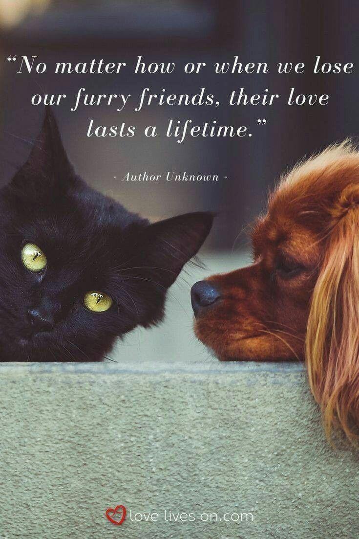 Our Pets Love Lasts A Lifetime