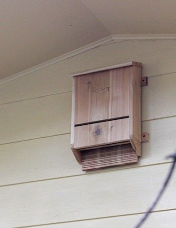 Best 25 Bat box ideas only on Pinterest Bat box plans Build a