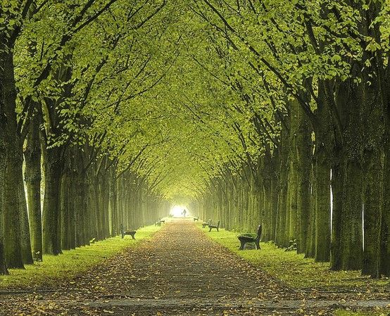55 Best Tree Lined Driveway Images On Pinterest Tree