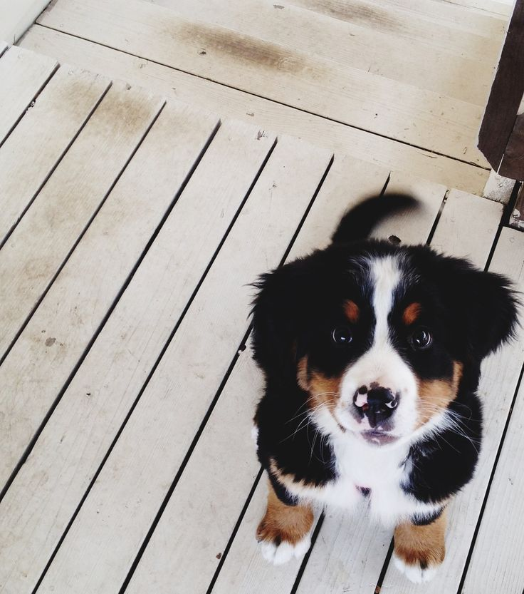 Best Oh SO Cute Images On Pinterest Beautiful Best Friends - Adorable pig whos grown up with dogs believes shes a puppy too