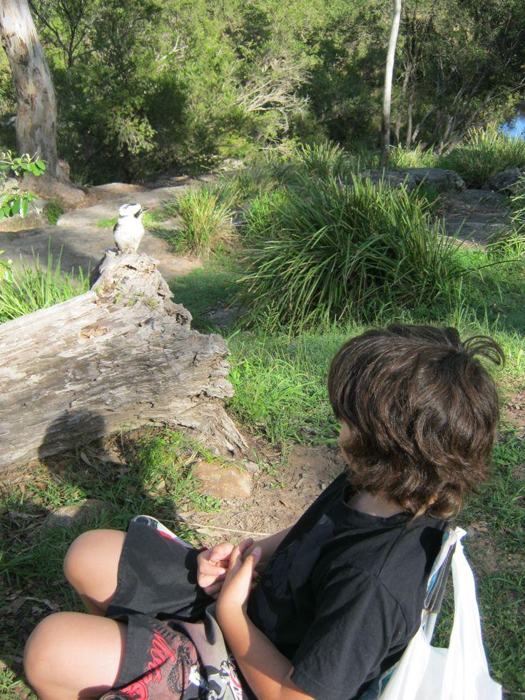 Koda with kookaburra