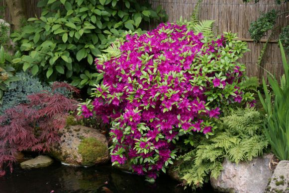17 Best images about tuinplanten on Pinterest   Search, Lavandula angustifolia and Hydrangea