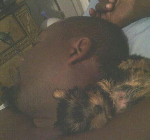 Teacup Yorkie Ms.Tues'Dae & my hubby...my two loves