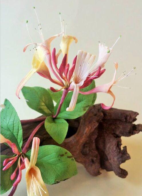 Sugar Flower artistry, Robert Haynes