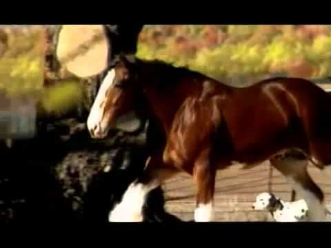 Budweiser Clydesdale Commercial Super Bowl 2008... although I do not like beer, I LOVE their commercials, because l love horses!